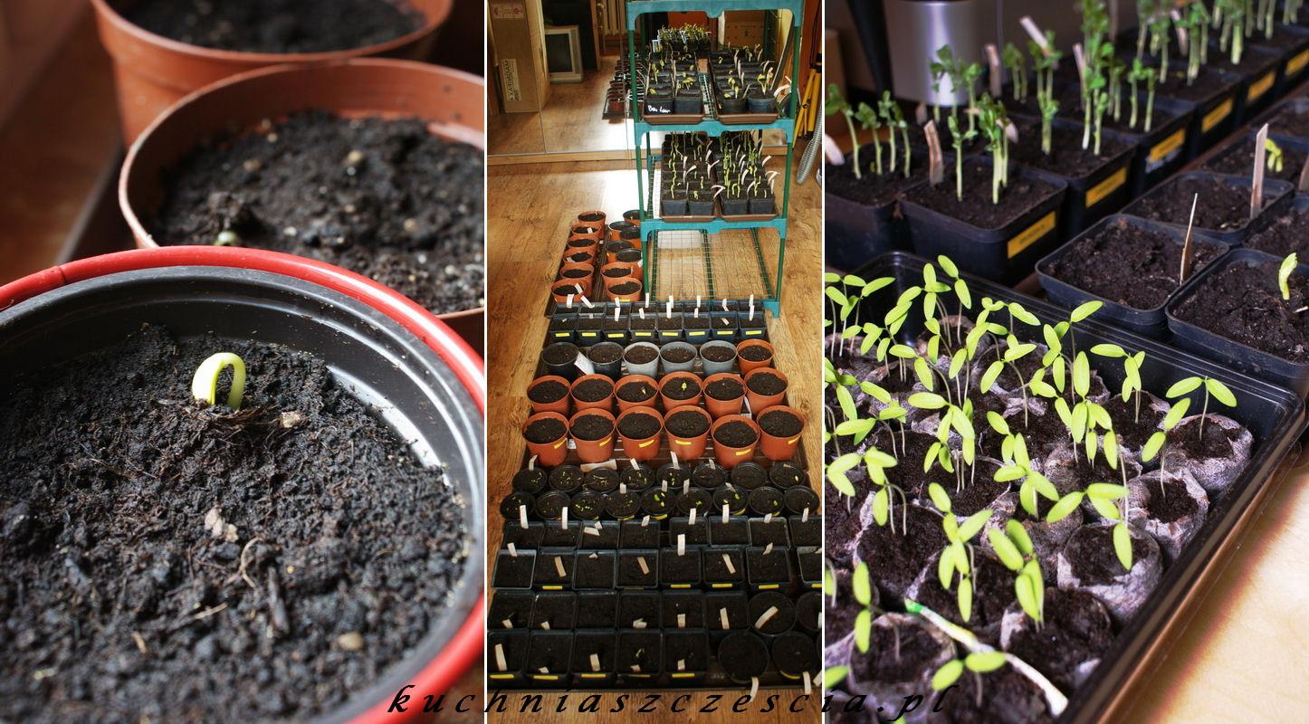 Niezbędnik Ogrodniczki Część 2 I Marchewkowe Ciasto